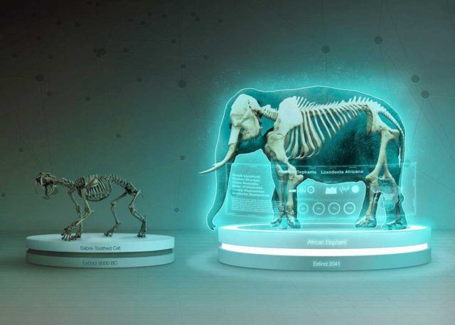 Scientific skeleton figures of a sabre-toothed cat and an African elephant.